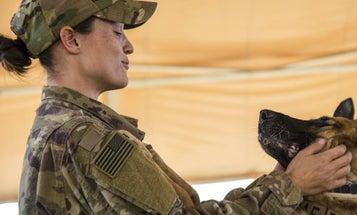Nido the Air Force dog
