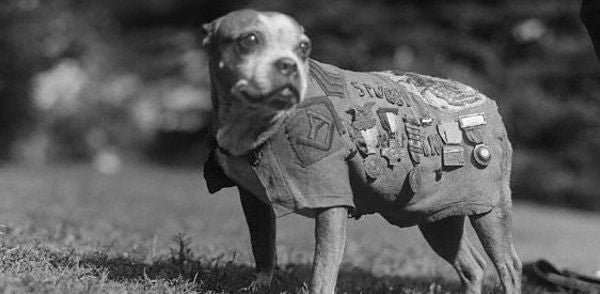 Meet Sergeant Stubby, The Most 'Decorated' Dog Of World War I