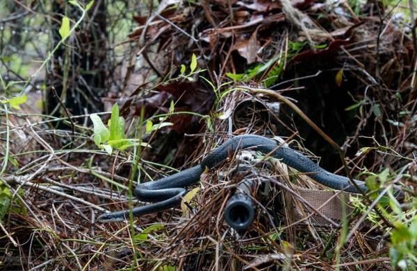 Can You Spot The Sniper In This Photo… Holy Crap Is That A Snake?