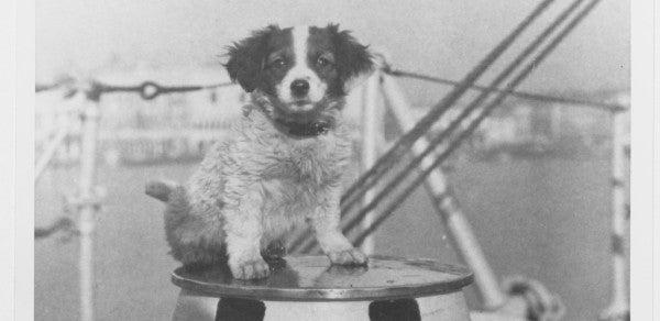 'Cognac' The Ship's Dog