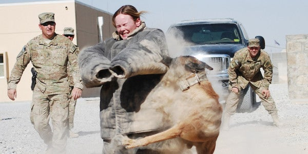Join the Army, Get Battered by a Dog?