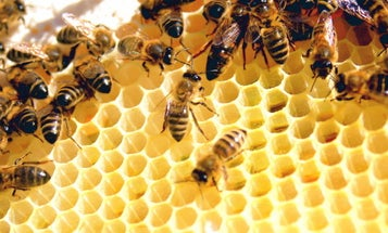 In Defense Of CGSC: It Produces The Worker Bees Every Army Needs