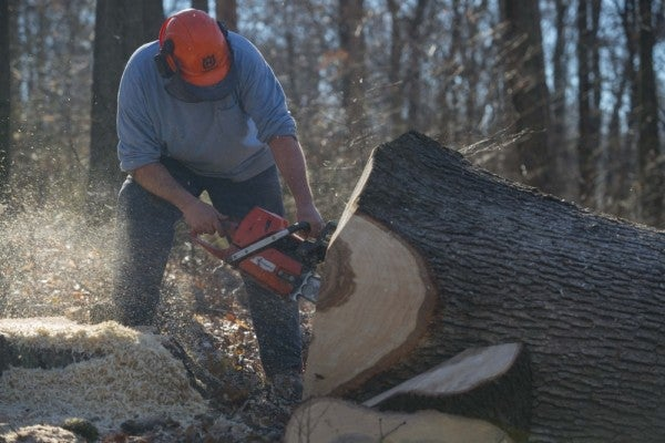 Why the Navy manages its own private white oak forest