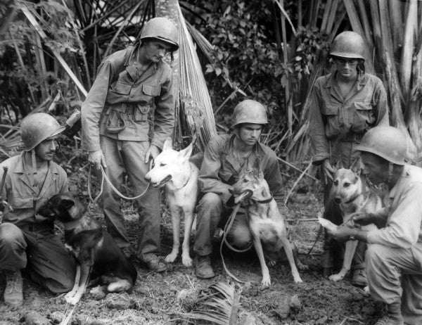 The Army Gave Us The Modern Military Working Dog 76 Years Ago Today