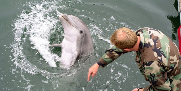 The Navy Is Training Bomb-Sniffing Dolphins