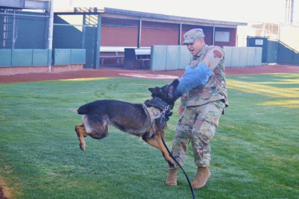On National K9 Veterans Day, Salute Some Of America's Finest Military Working Dogs