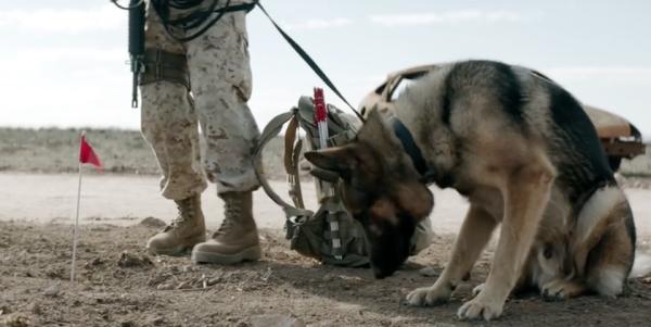 New Iraq War Film Focuses On Fierce Bond Between Marine And Her Working Dog