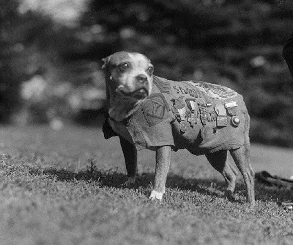 Sgt  Stubby Was The Original War Dog