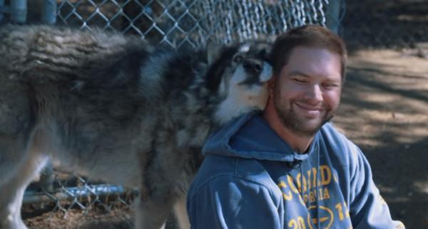 Program Uses Wolves To Treat PTSD In Veterans