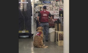 People Are Obsessed With This Vet And His Service Dog Who Both Work At Lowe's