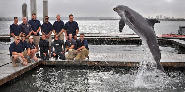 These Navy Dolphins Are On A Mission To Save An Endangered Species