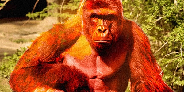 Someone Just Paid $100,000 For A Cheeto That Looks Like Harambe (RIP)