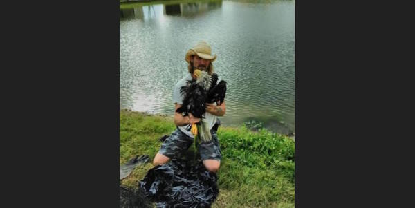 Florida Man Jumps In Pond To Rescue Eagle From Jaws Of Alligator