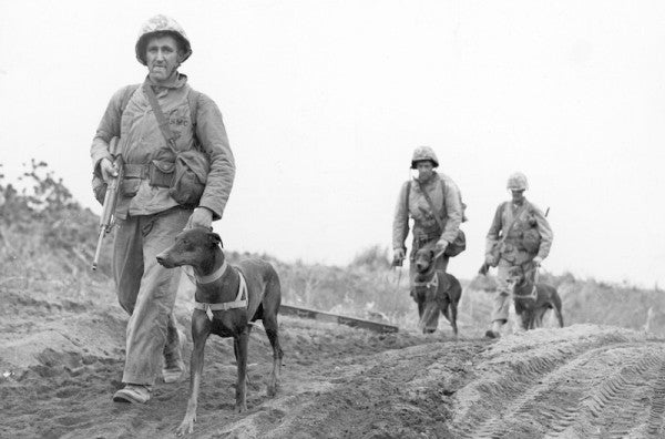 The Forgotten Heroes Of America's Past Wars: Military Working Dogs