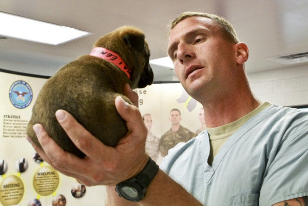 10 Photos That Prove The Military Wouldn't Be The Same Without Its Working Dogs