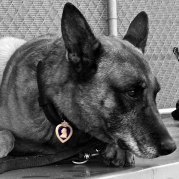 UNSUNG HEROES: The Military Dog Who Saved 4 Lives In An RPG Attack