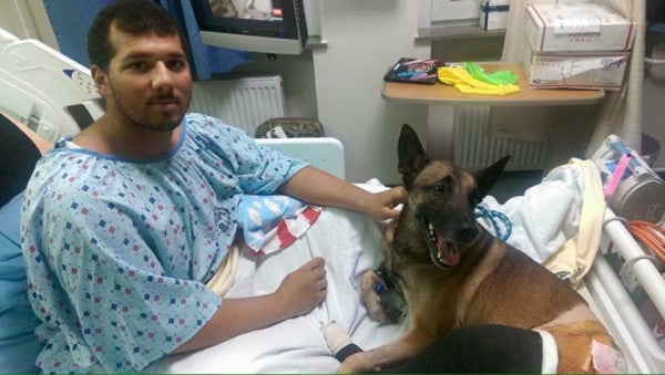 Photo Of Injured Military Working Dog With Purple Heart Goes Viral