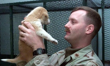 UNSUNG HEROES: This Army Captain Rescued Iraq's Zoo Animals From Looters, Bombs, And Starvation