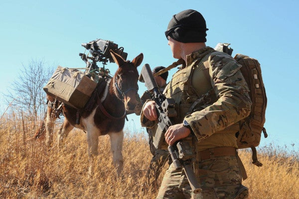 The Military Has A Whole Menagerie Of War Animals