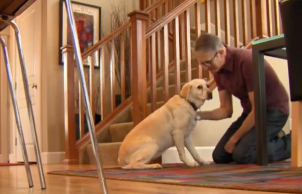 A Curious Dog Unearths Korean War Veteran's Purple Heart