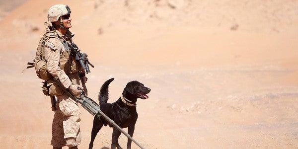 Devil Dog And War Dog Forge Lasting Bond, Overcome Hardship Together