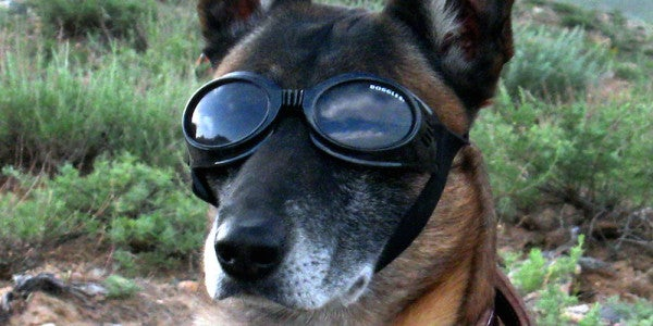 Dogs Have Been Involved in US Military Operations Since 1942