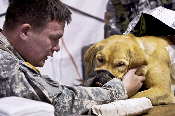 This Nonprofit Sends Rescue Dogs To Comfort At-Risk Veterans