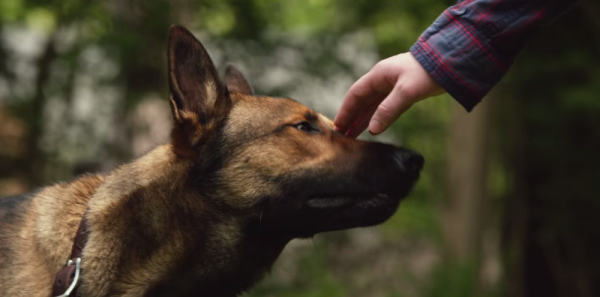 """Hollywood Fails To Get War Dogs Right With """"Max"""""""