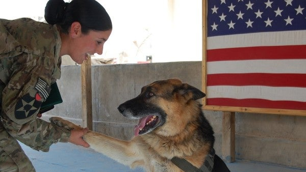 New Bill Would Bring Military Working Dogs Home After Retirement