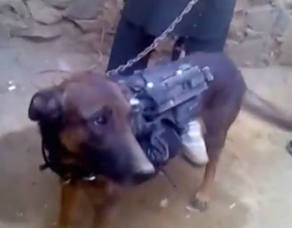 The Taliban Has Reportedly Captured A Military Working Dog