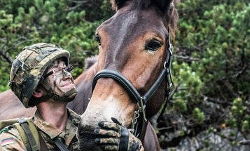 These German soldiers and their mules have achieved all my relationship goals