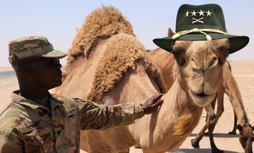 The bizarre yet true story of how the US Army tried to conquer the American West with camels