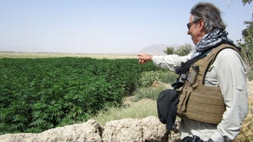 Steve Tavella, a field program officer for the U.S. Agency for International Development, surveys a field of cannabis (marijuana) near the village of Haji Nikal, Afghanistan, July 22, 2012. USAID focuses on projects such as providing assistance and resources for legal crop production to the Afghan people.