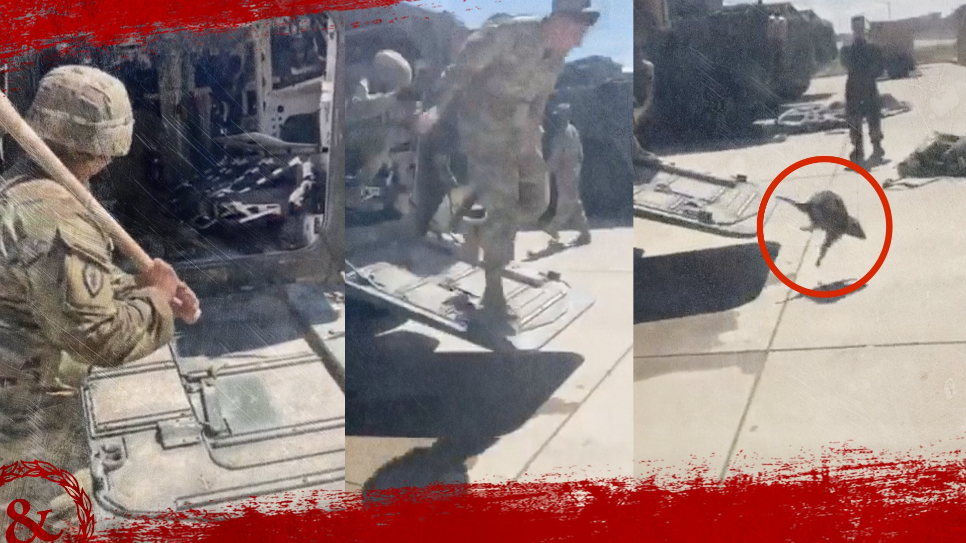 Watch these US soldiers retreat from the raccoon insurgent that commandeered their Stryker