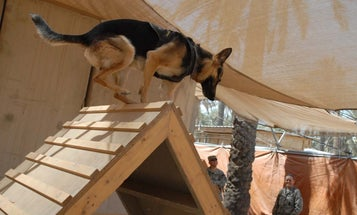 These are some of the greatest military working dogs in history