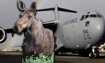 Here's why the Air Force's workhorse C-17 is called 'the Moose'